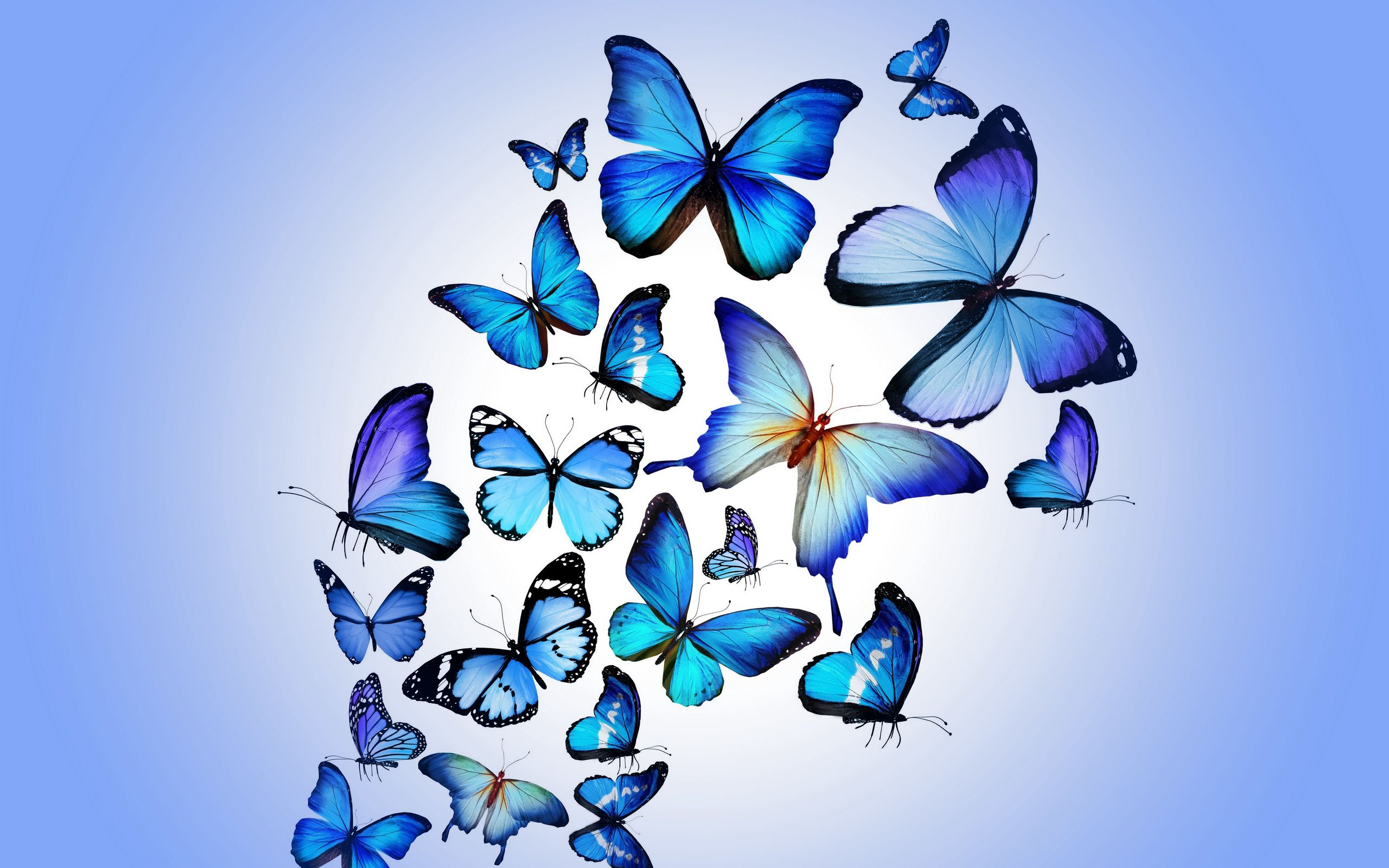 2560x1600 Wallpaper butterfly, colorful, blue, drawing, art, beautiful