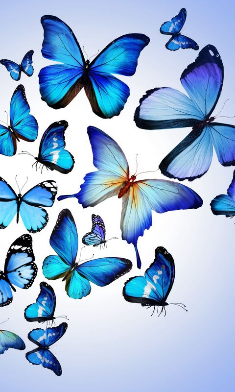480x800 Wallpaper butterfly, colorful, blue, drawing, art, beautiful