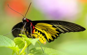 Preview wallpaper butterfly, colorful, close-up