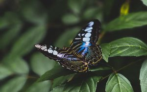 Preview wallpaper butterfly, colorful, insect, leaves, macro