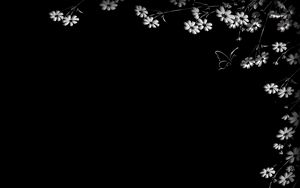 Preview wallpaper butterfly, flower, black background