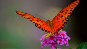 Preview wallpaper butterfly, flower, macro, petals, wings