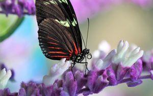 Preview wallpaper butterfly, flower, wings, pattern, macro