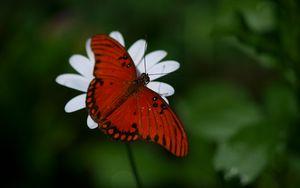 Preview wallpaper butterfly, flower, wings