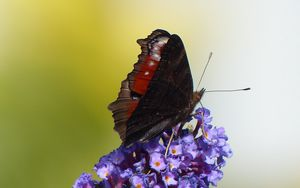Preview wallpaper butterfly, flower, wings, close-up