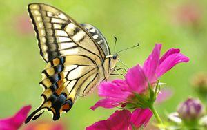 Preview wallpaper butterfly, flower, wings, pattern