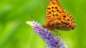 Preview wallpaper butterfly, grass, wings