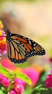 Preview wallpaper butterfly, insect, flowers, bright, macro