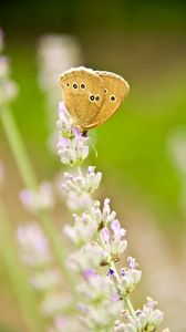 Preview wallpaper butterfly, insect, flowers, macro, light