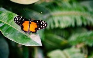 Preview wallpaper butterfly, insect, leaf, plant, macro