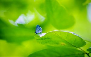 Preview wallpaper butterfly, insect, plant, leaf, macro