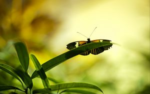 Preview wallpaper butterfly, insect, plant, leaf, macro, green