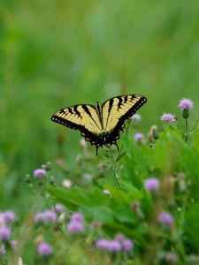 Preview wallpaper butterfly, insect, plants, macro, blur