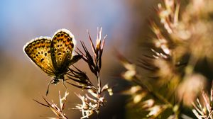 Preview wallpaper butterfly, insect, plants, macro