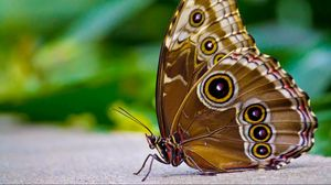 Preview wallpaper butterfly, patterns, wings, surface, insect
