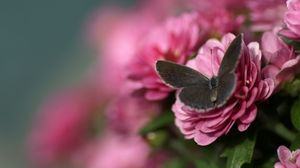 Preview wallpaper butterfly, petals, flower, wings