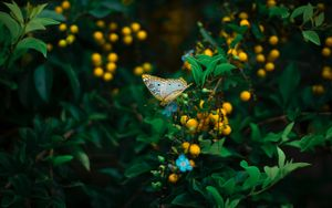 Preview wallpaper butterfly, plant, flowers, leaves, macro, wildlife