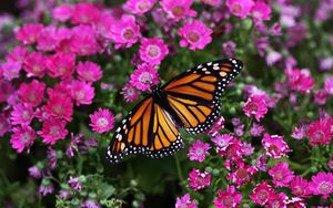 Preview wallpaper butterfly, plant, flowers