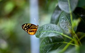 Preview wallpaper butterfly, plant, leaf, background
