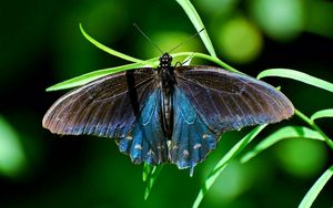Preview wallpaper butterfly, plant, wings