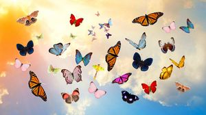 Preview wallpaper butterfly, sky, collage, photoshop