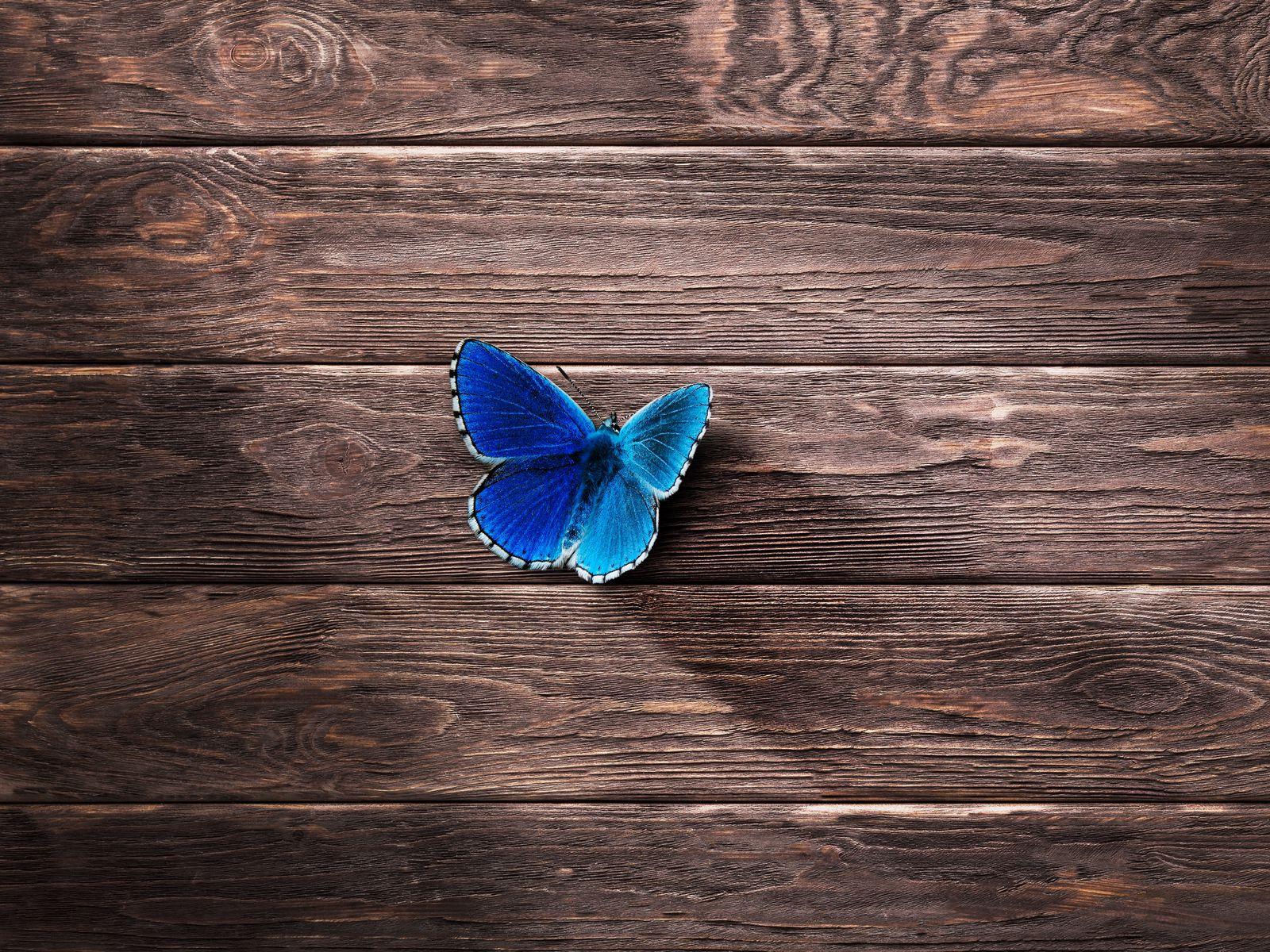 1600x1200 Wallpaper butterfly, surface, wooden