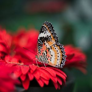 Preview wallpaper butterfly, wings, bright, flower, blur