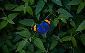 Preview wallpaper butterfly, wings, colorful, leaves