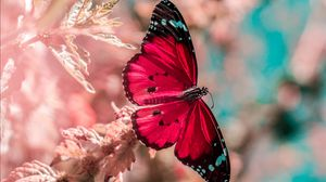 Preview wallpaper butterfly, wings, insect, grass, bright, macro