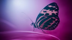 Preview wallpaper butterfly, wings, macro, surface, petal