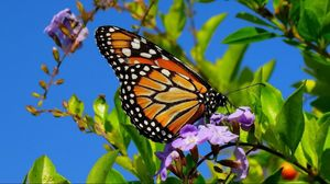 Preview wallpaper butterfly, wings, patterns, plant
