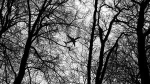 Preview wallpaper bw, plane, branches, trees