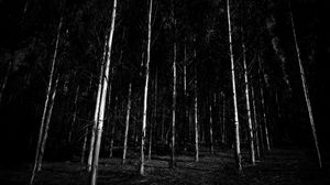 Preview wallpaper bw, trees, forest, gloomy