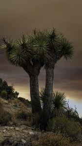Preview wallpaper cactus, plant, needles, clouds, nature
