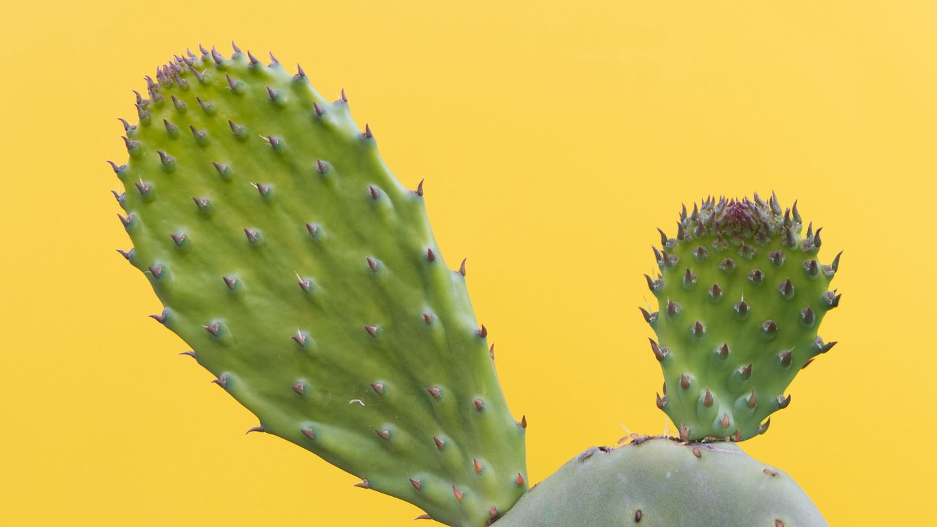 1366x768 Wallpaper cactus, succulent, prickly, green, minimalism