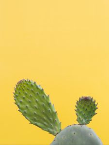Preview wallpaper cactus, succulent, prickly, green, minimalism