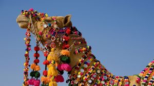 Preview wallpaper camel, dress, head, sky