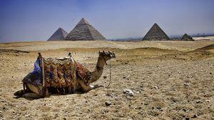 Preview wallpaper camel, pyramids, egypt