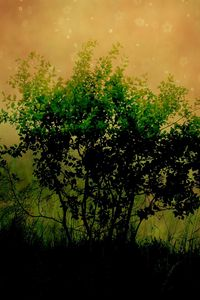 Preview wallpaper canvas, drawing, wood, field, grass, shade