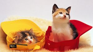 Preview wallpaper cap, kittens, lie