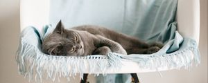 Preview wallpaper cat, animal, relax, chair, pet