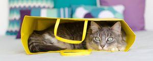 Preview wallpaper cat, bag, lying