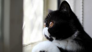 Preview wallpaper cat, black and white, color, profile, view, looking out the window