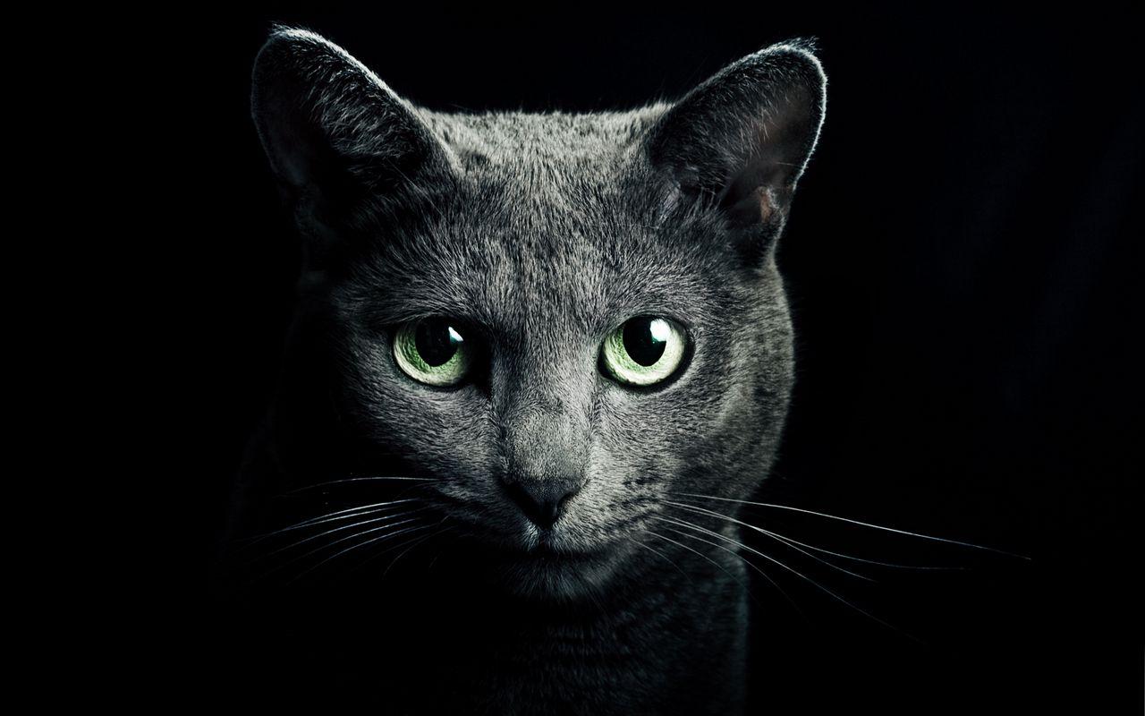 1280x800 Wallpaper cat, black, breed, russian, blue eyes, green eyes, black background