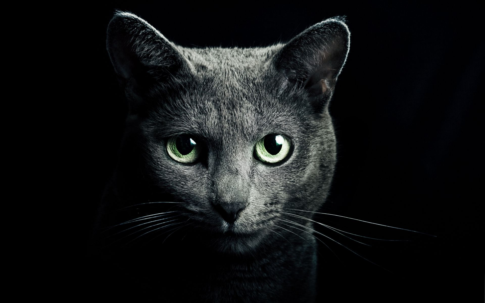 1920x1200 Wallpaper cat, black, breed, russian, blue eyes, green eyes, black background