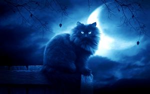 Preview wallpaper cat, black, moon, night, silhouette, outlines