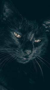 Preview wallpaper cat, black, muzzle, look, sleepy