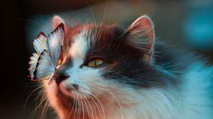 Preview wallpaper cat, butterfly, tenderness, fluffy
