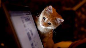 Preview wallpaper cat, computer, curiosity