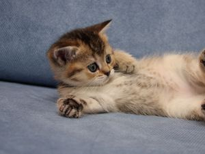 Preview wallpaper cat, cute, lie